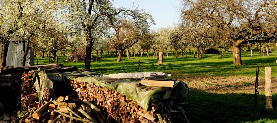 Hochstammobstwiese in Löhnen bei Voerde © Peter Malzbender